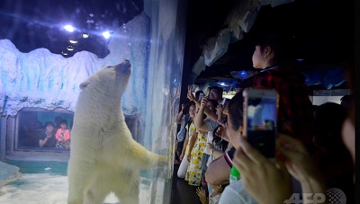 中国・広州の動物園「正佳極地海洋世界」で飼育されるホッキョクグマのピザの写真を撮る来園者(2016年7月24日撮影)