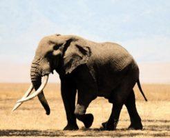 象フリー画像より