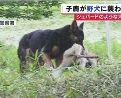 野犬になって小鹿を襲う犬