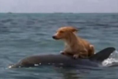 おぼれた犬を助けたイルカ