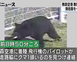 ツキノワグマが青森空港滑走路に侵入