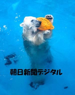 一人遊びするシロクマ熊本動物園