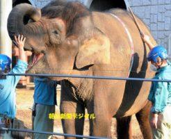 象のふくちゃん結核
