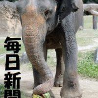 天王寺動物園のラニー博子死去