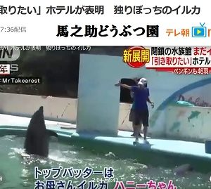 閉館した水族館のイルカ、「引き取りたい」ホテルが表明