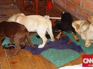 子犬の体内に麻薬隠して密輸、元獣医学部生に禁錮刑(米)