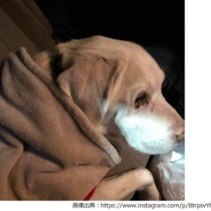 『動画』飼い犬(ラブラドール)を蹴りあげる婆