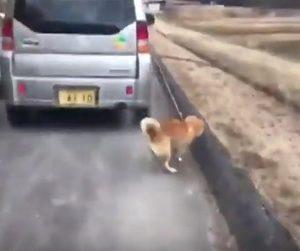 車で犬を散歩する88歳の老人