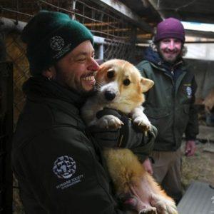 韓国の食用犬の飼育場から言う200匹救出