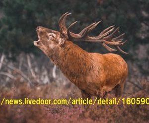 プリオン病に感染した鹿肉を食べると人はどうなるのか?
