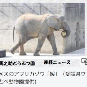 アフリカゾウに襲われ飼育員けが・愛媛県立とべ動物園