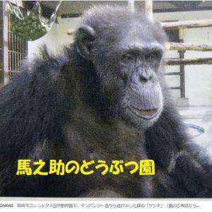 チンパンジーが施設脱走、宮崎 フェニックス動物園