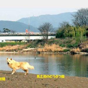 野犬が繁殖・京都桂川河川敷・解決策見えず