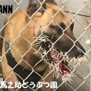 警察犬の顔にヤマラシの針200本