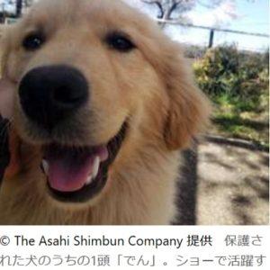 宇都宮動物園に捨て犬20頭、昨年末から計3回