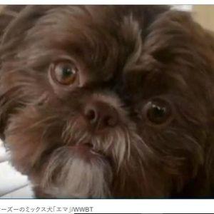「愛犬と埋葬を」遺言通り元気な犬が安楽死させられた
