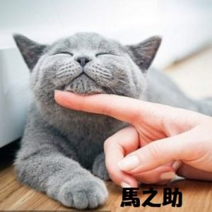 【衝撃】猫好き女性は肺がん死亡率2.85倍!