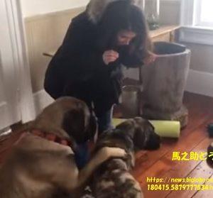 【動画】お座りできない仔犬の弟犬にお座りを教える兄犬~